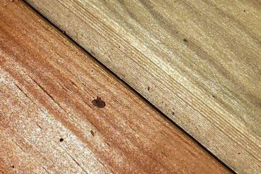 Can You Use Pressure Treated Wood Indoors